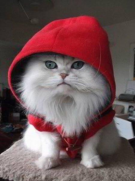 Pisică cu hăinuță și glugă roșie, Foto: nicepetsblog.com