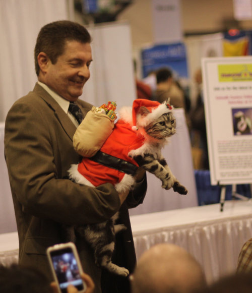 Pisică deghizată în Moș Crăciun, Foto: thebigoh.wordpress.com