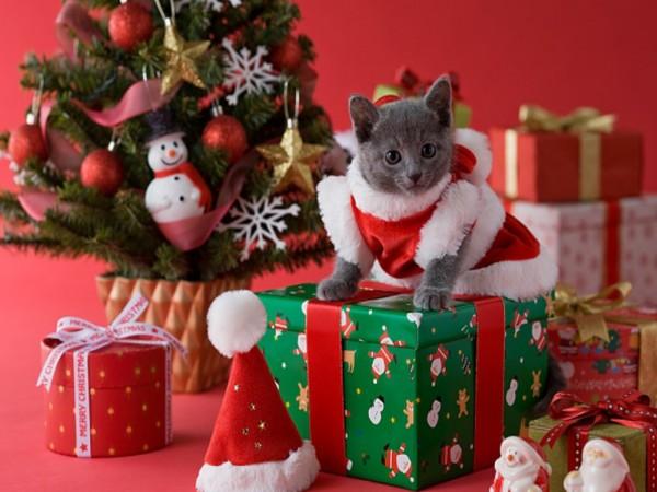 Pisică deghizată în crăciuniță, Foto: 3.bp.blogspot.com