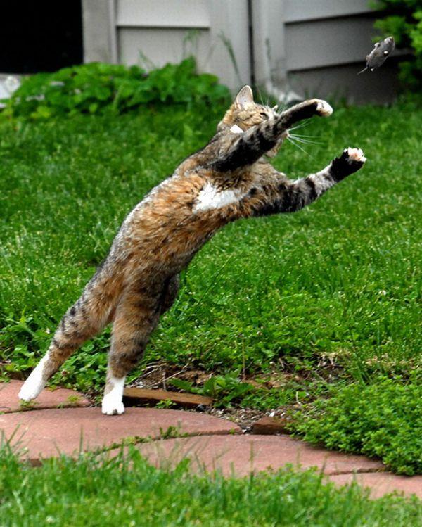 Pisica și soarecele, Foto: roflzoo.com