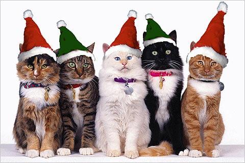 Pisici cu căciulițe de Moș Crăciun, Foto: bandofcats.com