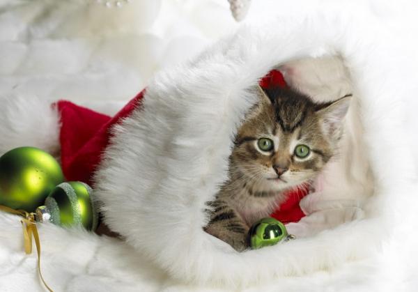 Pisoi în căciuliță de Moș Crăciun, Foto: christmas-kid.com