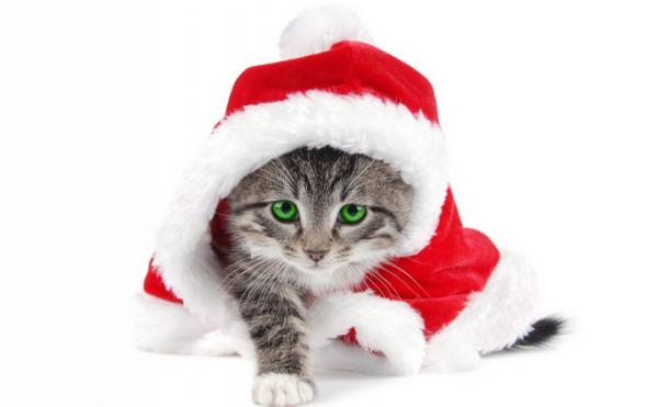Pisoi cu hăinuță cu glugă de Moș Crăciun, Foto: christmas-kid.com