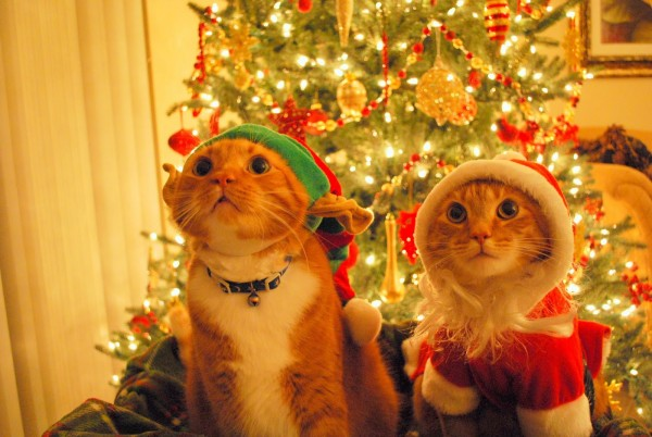 Pisoi simpatici cu hainuțe de Moș Crăciun, Foto: loopele.com