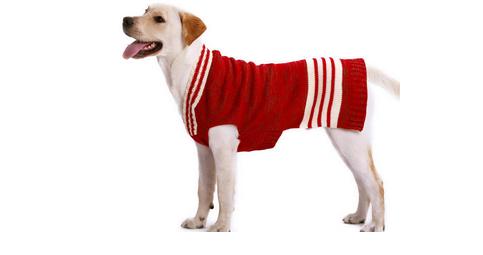 Pulover pentru câine, Foto: mushucanineboutique.com