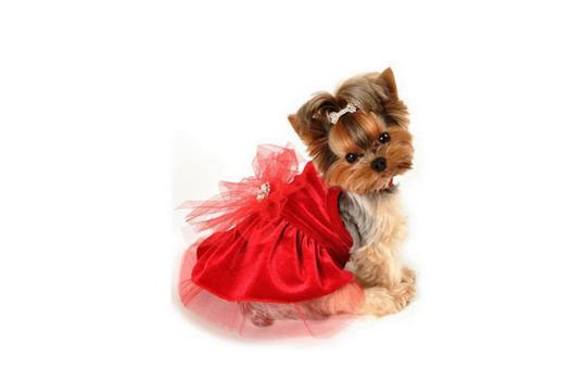 Rochiță roșie pentru câțelușă, Foto: polyvore.com