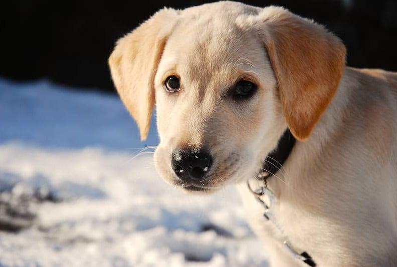 Câine, Foto: labiszynzhp.manifo.com