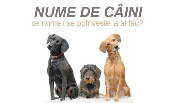 Nume de câini