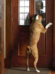 Câinele poate fi învățat să deschidă/ închidă ușa, Foto: barkbusterssouthflorida.blogspot.ro
