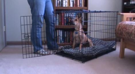 Cum înveți câinele să stea în cușcă