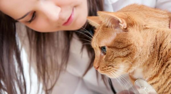 Otravirea cu ibuprofen la pisică, Foto: specific-diets.com