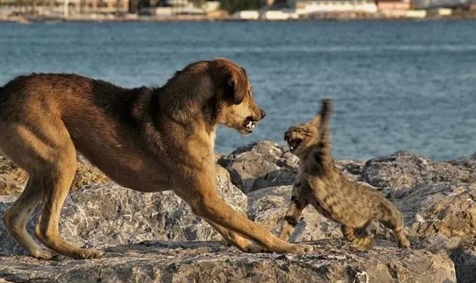 Pisica este agresivă, la fel și câinele, Foto: aaanything.net
