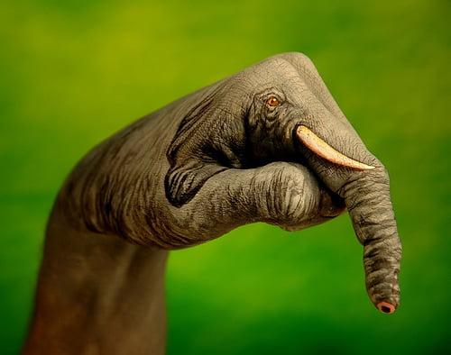 animale pe mâini - elefant