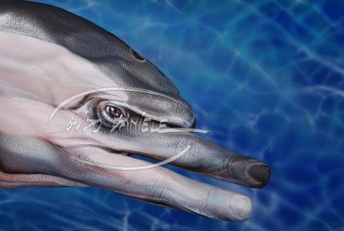 animale pe mâini - delfin