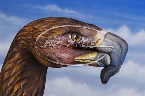 animale pe mâini - vultur
