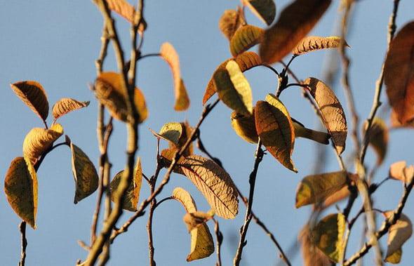Pasărea din copac
