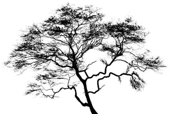 arbori3
