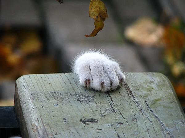 Ghearele pisici, Foto: fantom-xp.com