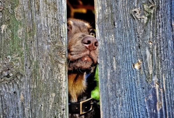 Tentația câinelui de a fugi de acasă, Foto: vk.com