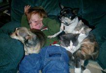 Copiii și animalele de companie