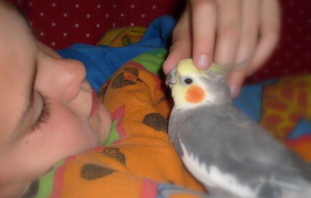 Copilul și animalul său de companie