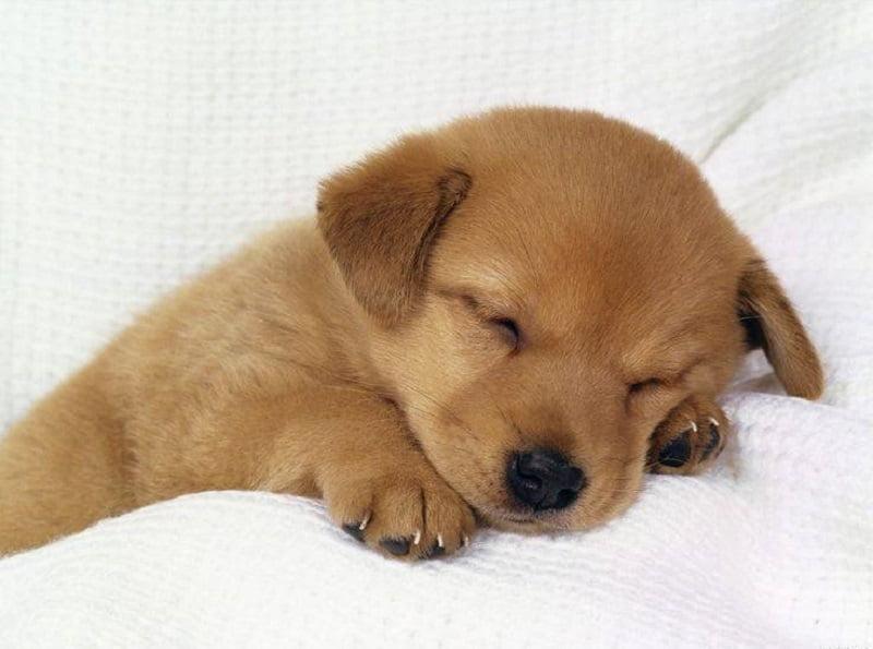 catel somnoros dupa ce a fost hranit