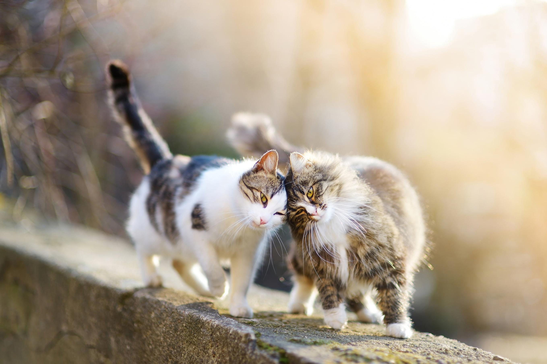 3-pisici-in-calduri