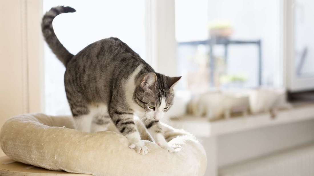 4-pisica-framanta-labutele