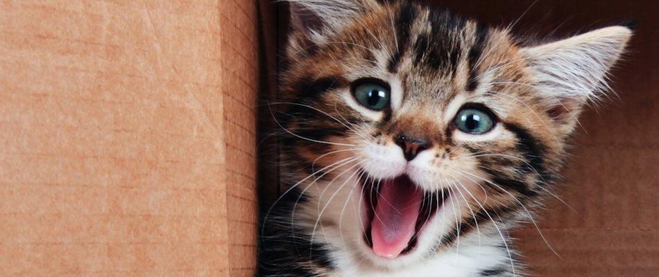 6-mieunatul-pisicilor