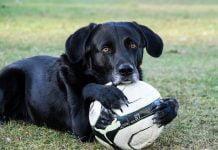 1-fotbal