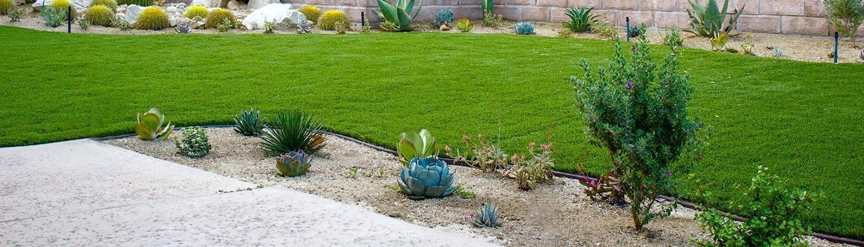 12-plante-rezistente-la-seceta