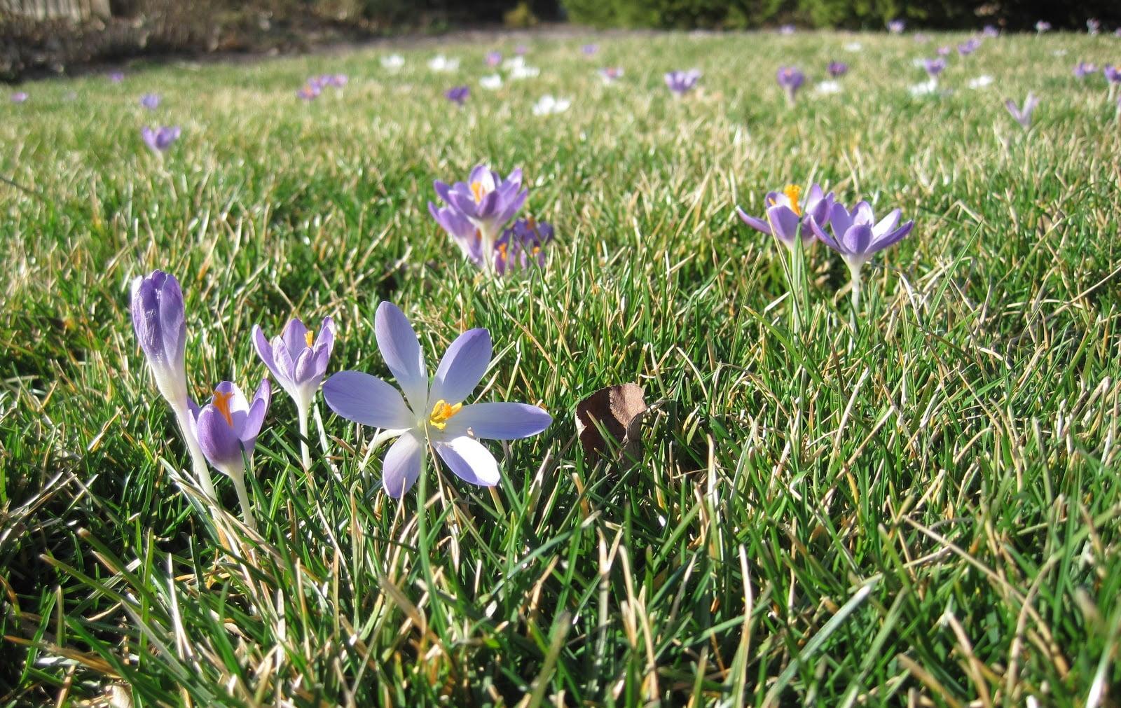 5-gazon-cu-flori