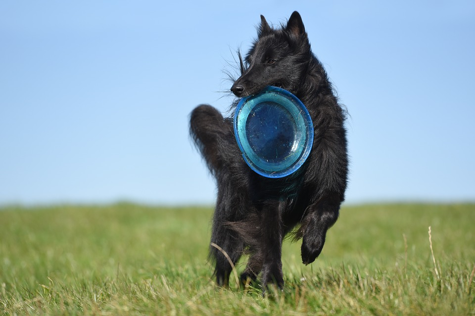 7-frisbee