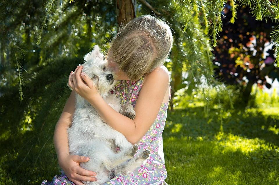 3-dragostea-pentru-un-animal-de-companie