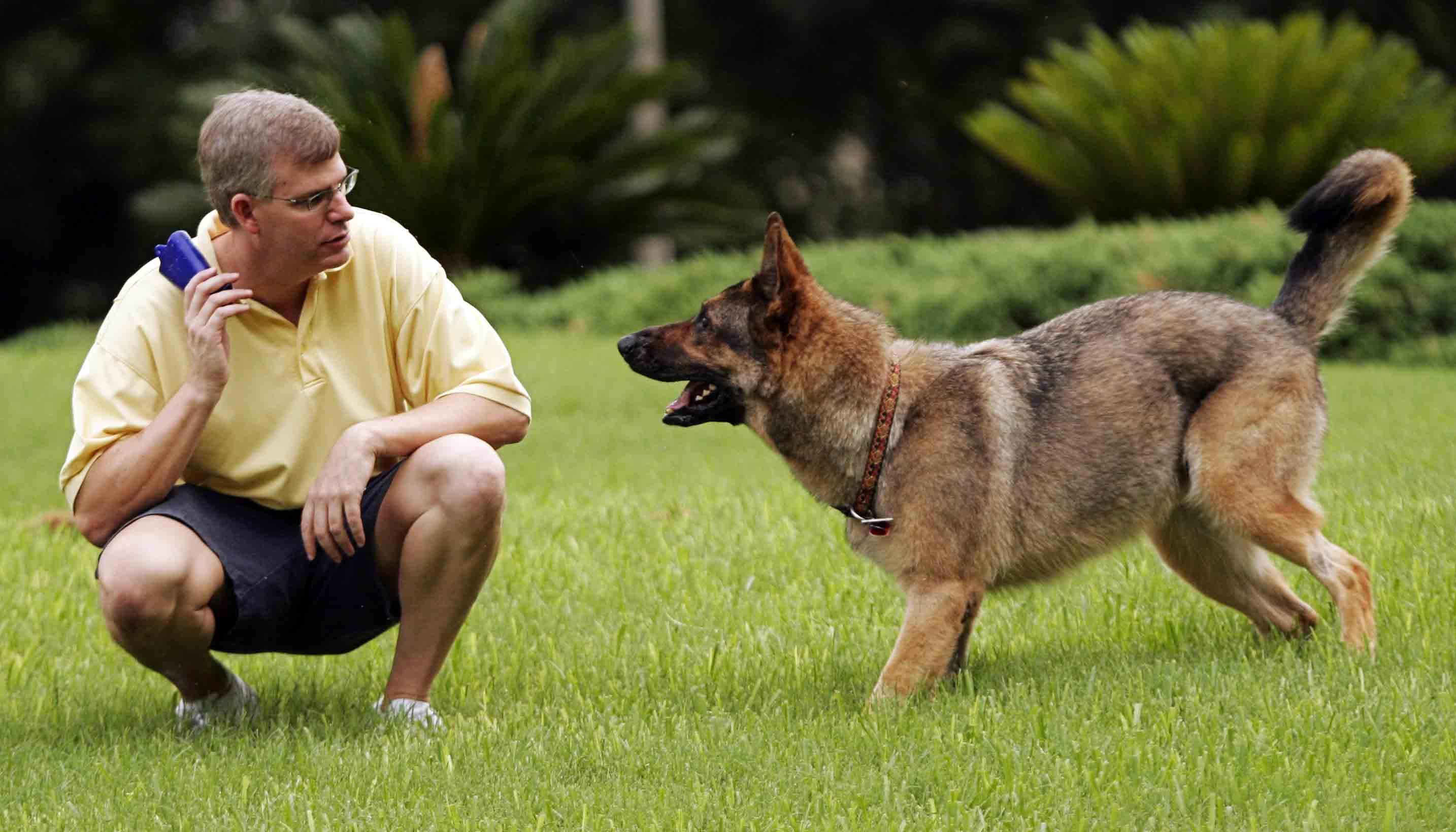 Cursuri de dresaj canin
