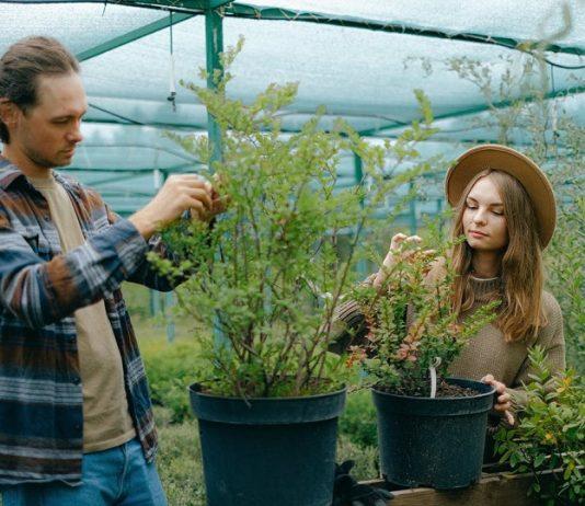 sera, plante, tineri